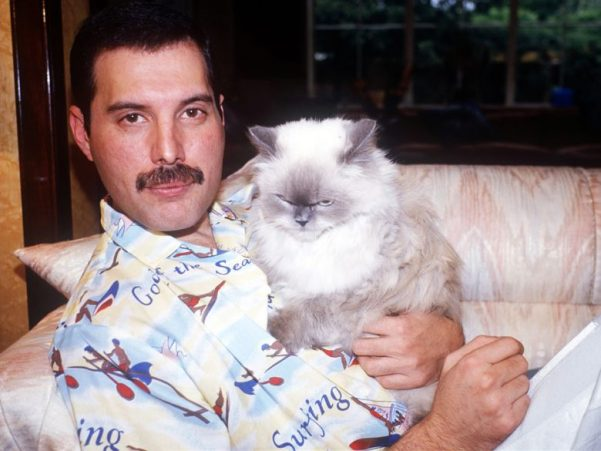 Freddie Mercury with one his cats