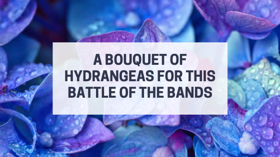 A Bouquet of Hydrangeas for this Battle of the Bands